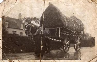 Sepia photo of my grandad with a decorated cart and heavy horse.